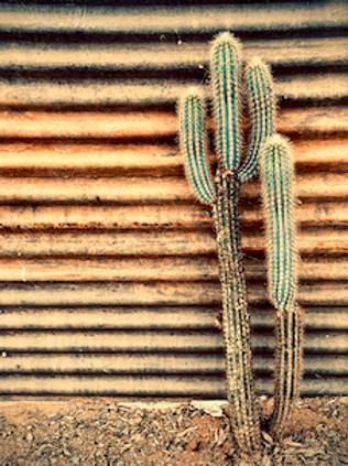 'Tin Cactus' by Tanya Rose