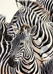 Kate-Jenvey-colour-pencil-zebras.jpg