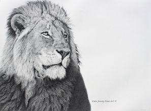 KateJenvey-lion-pencil.jpg