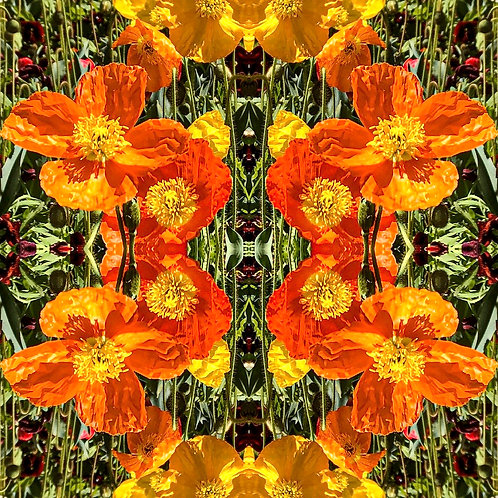 Florascopes Ⅵ by Tanya Rose