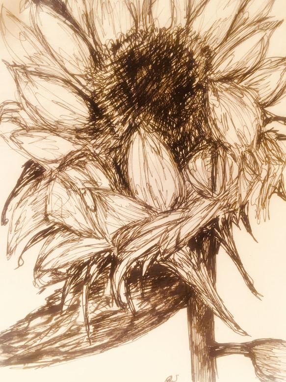 flowerseries 2.jpg