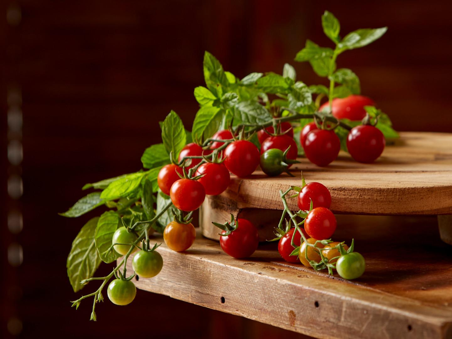 Rainbow Tomatoes on the Vine
