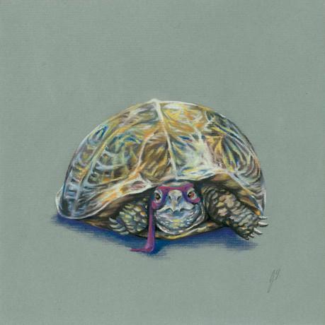 Donatello-Heroes in the Halfshell.jpg