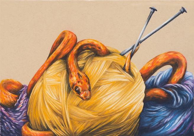 Avid Knitter