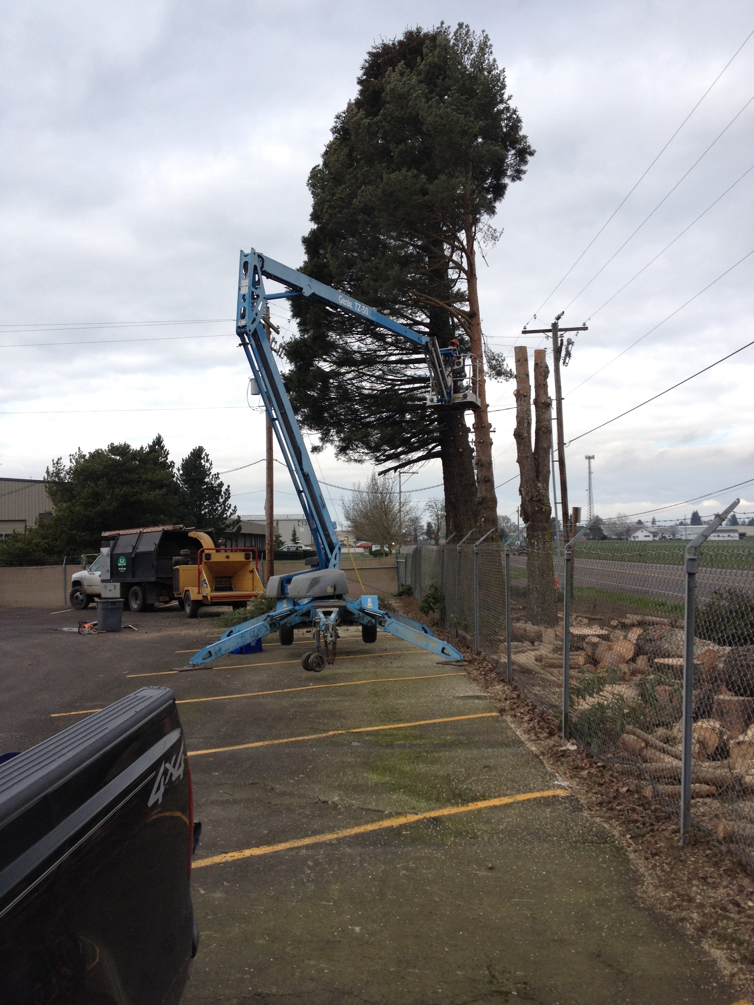 2015 Commercial Tree Removal