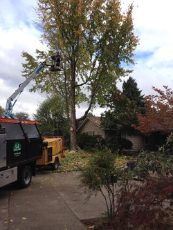 2015 Residential Tree Service
