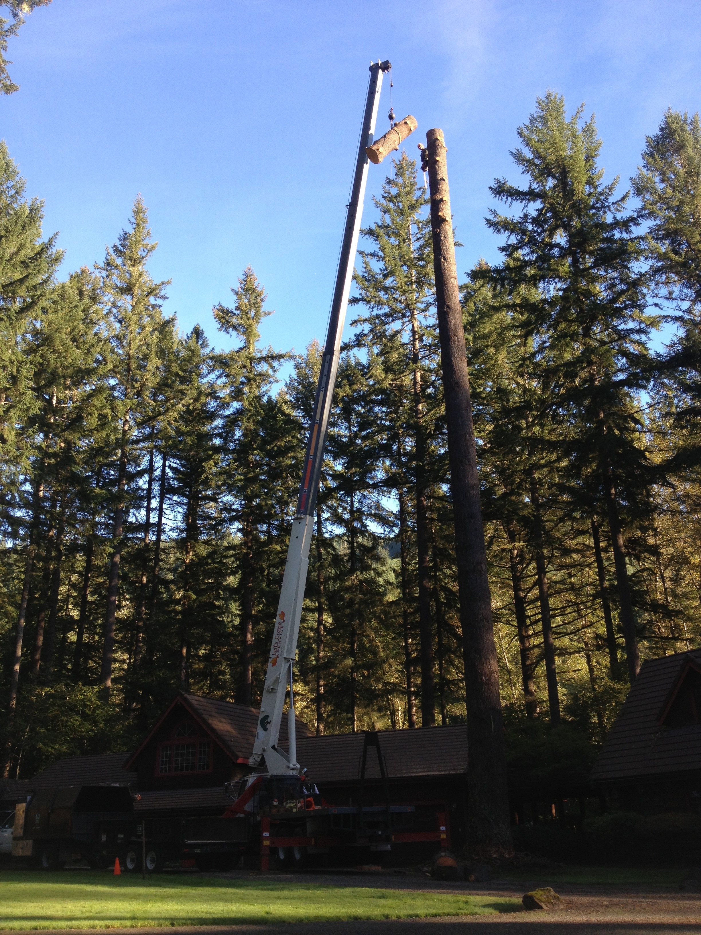 2015 Industrial Tree Removal