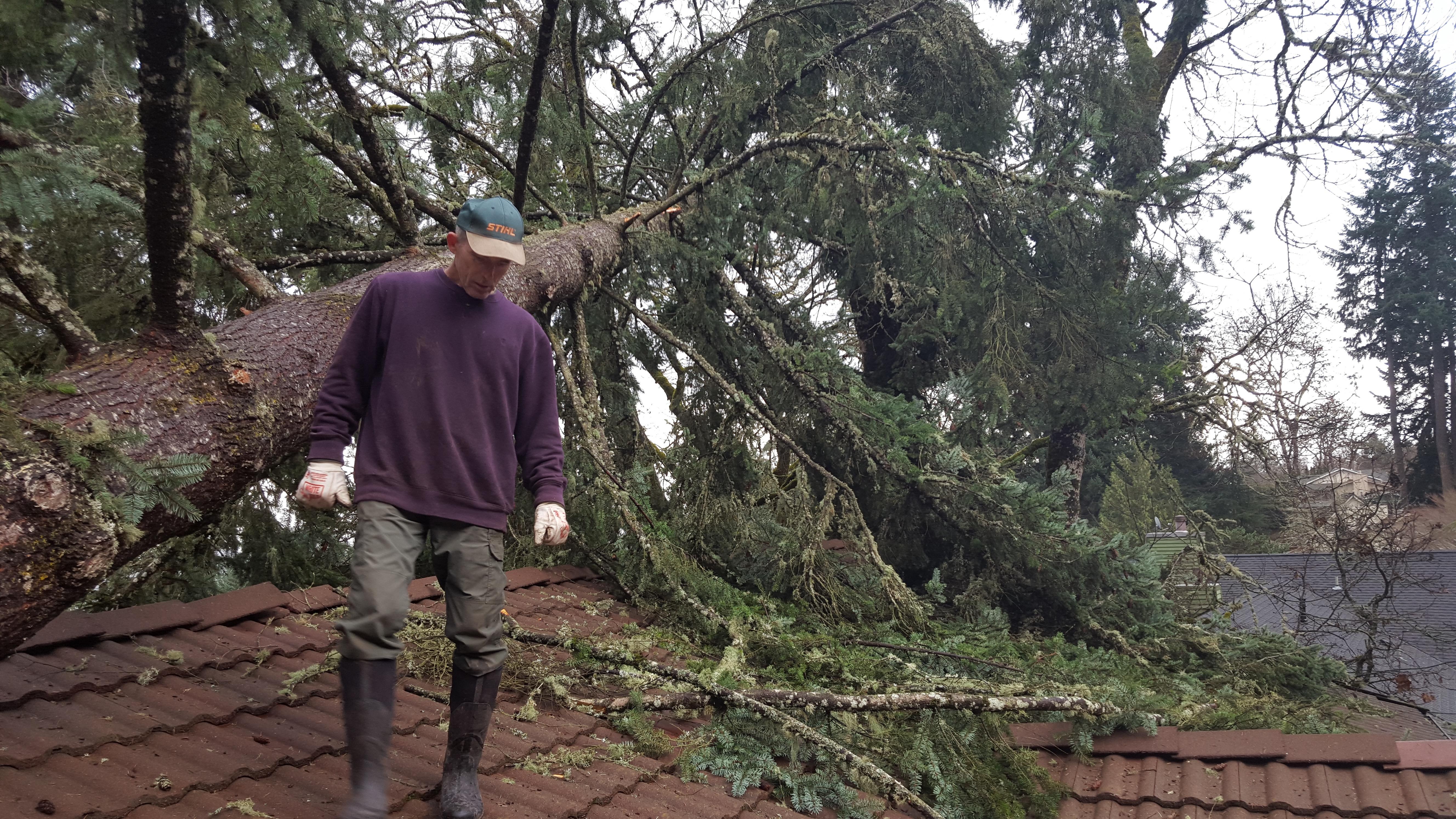 2015 Storm Tree Service