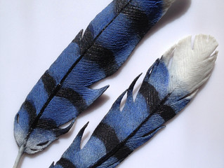 Hot Out of the Kiln: Blue Jay Feathers