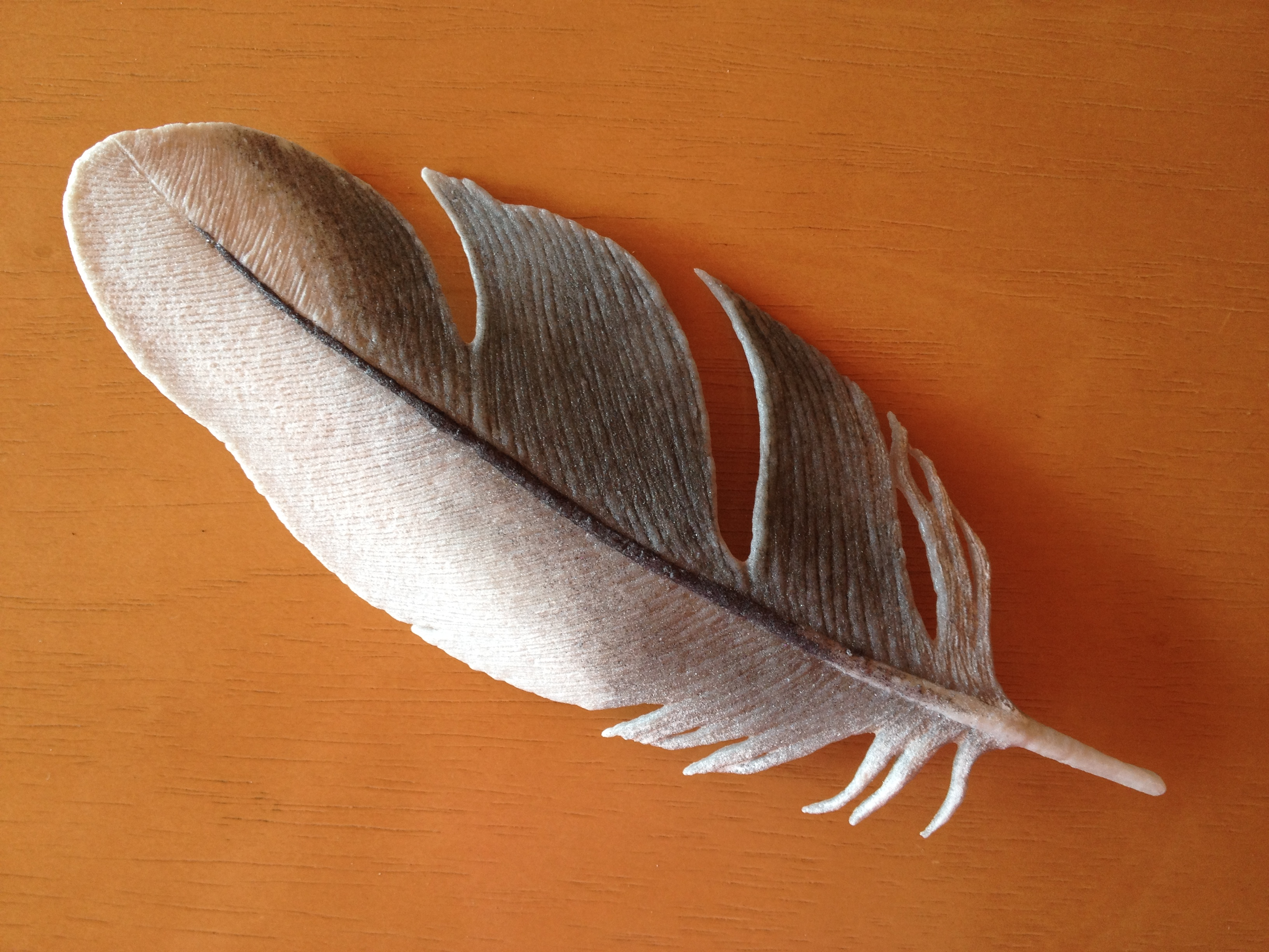 """Milet"" Cockatiel Feather"