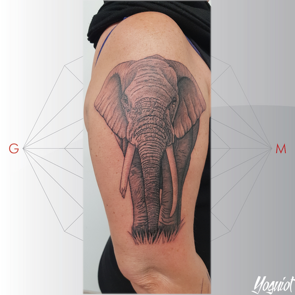tatouage elephant realiste réalisé par Yoguiot au salon de tatouage Quadrilatera tattoo shop Marguerittes à 15 min de Nimes.