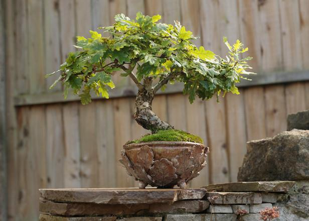 Bonsai Bowl. 1.jpg