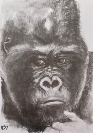 Gorilla # 1