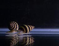 assassi n snail.jpg