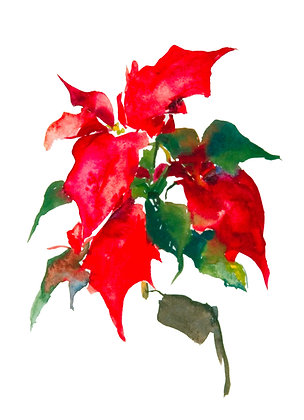 Poinsettia II (2002) Hand-Deckled Card
