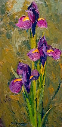 Blue Iris (1996)