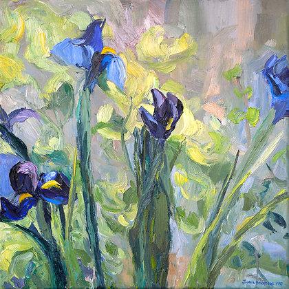 Iris (1997)