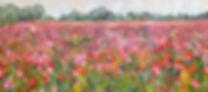 Vesture of Wildflowers III.jpg