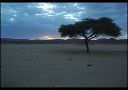Flickr - Algeria #2