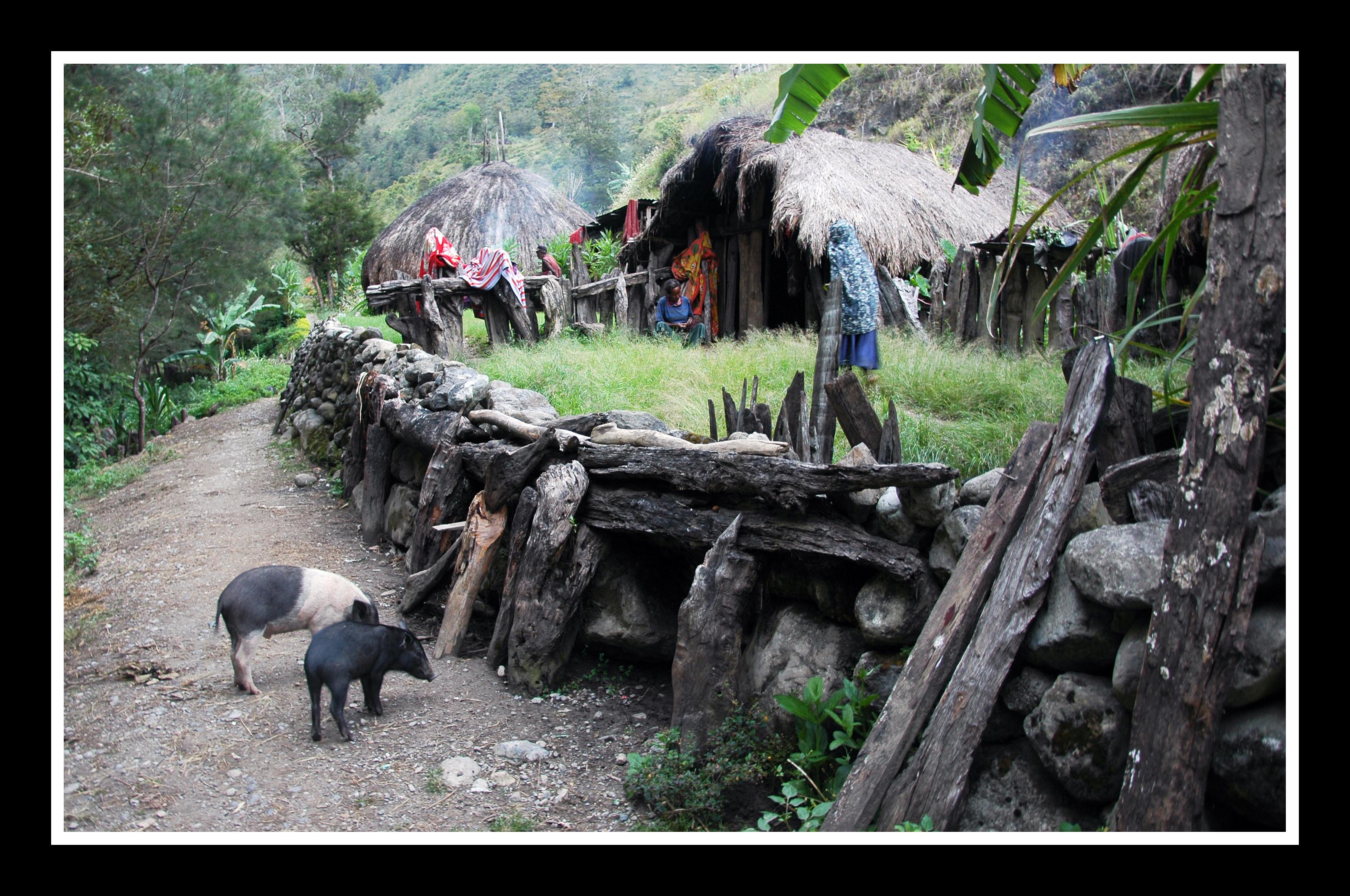West Papua #10