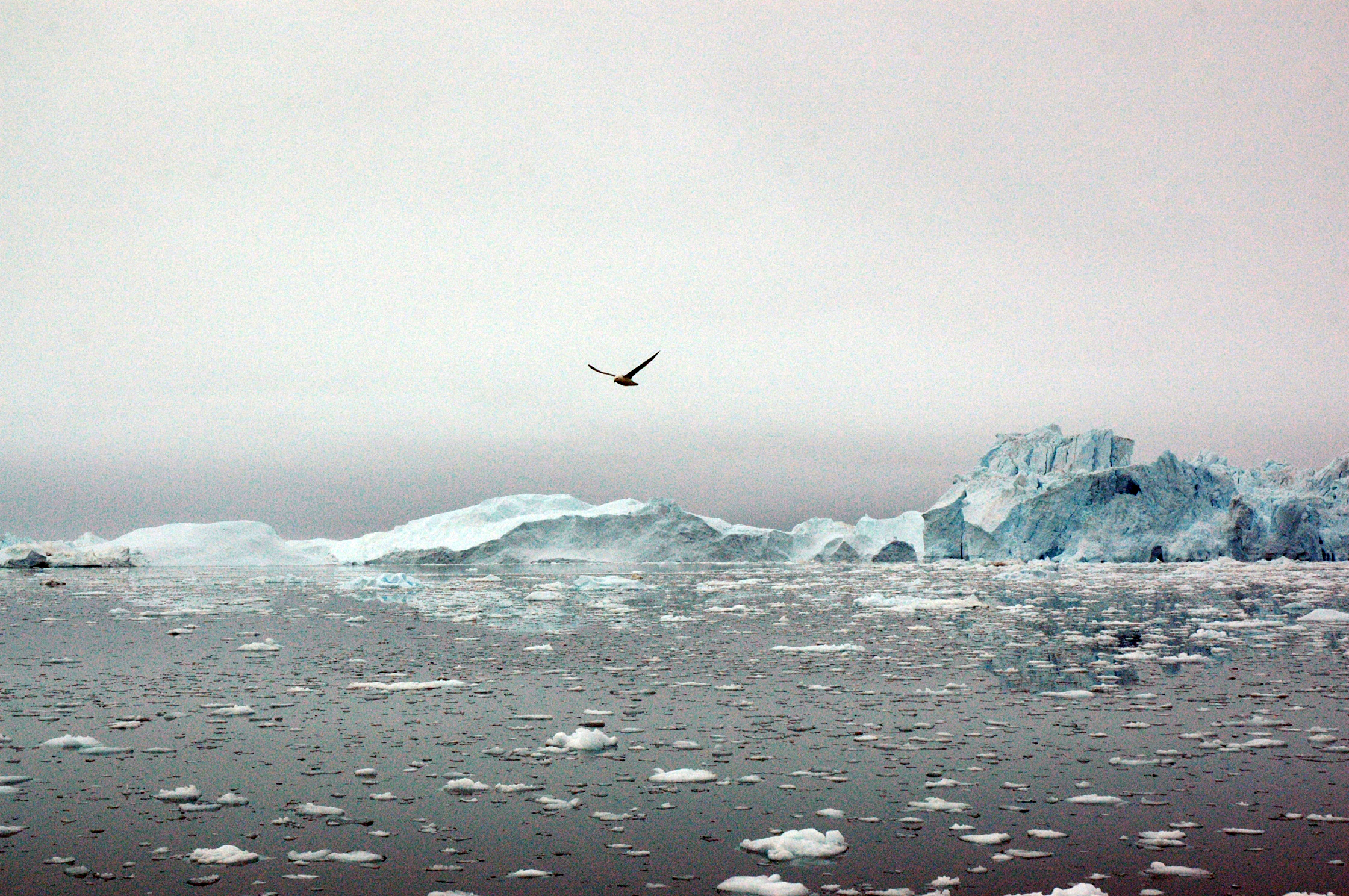 #1 Greenland