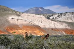 Patagonia #12