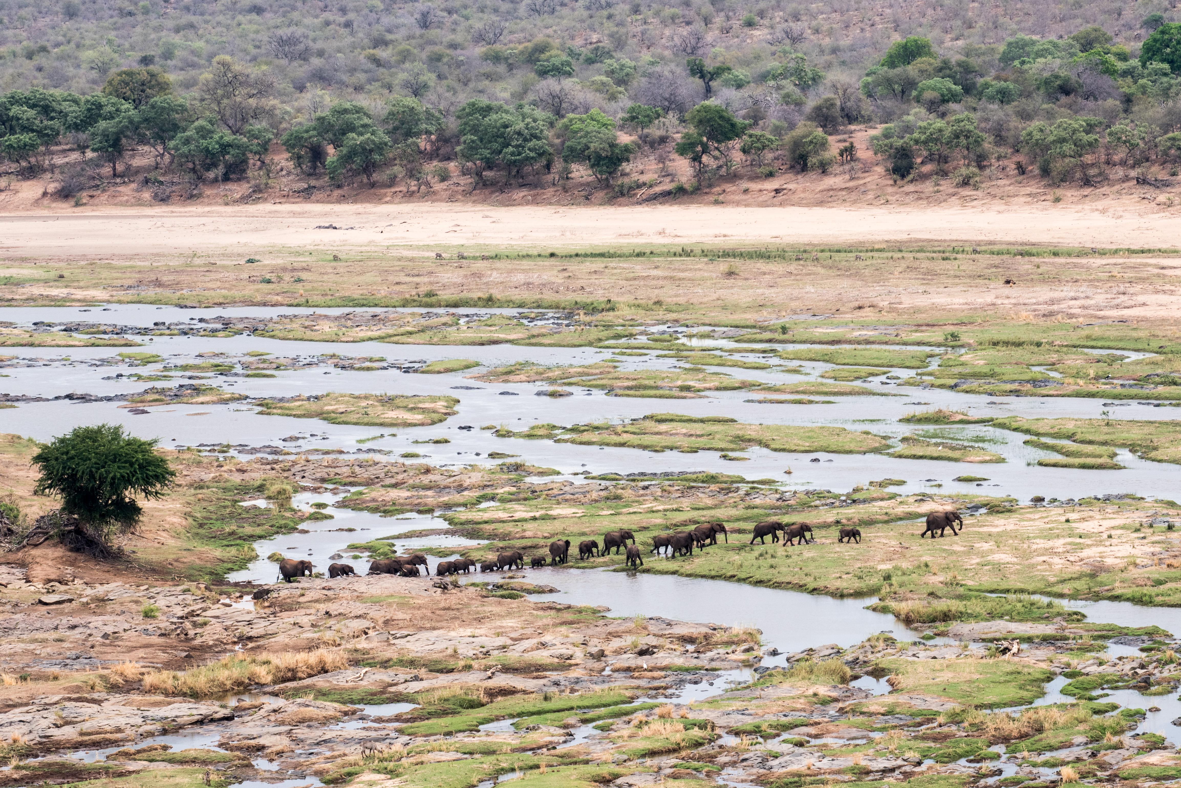 Kruger_ElephantTroop
