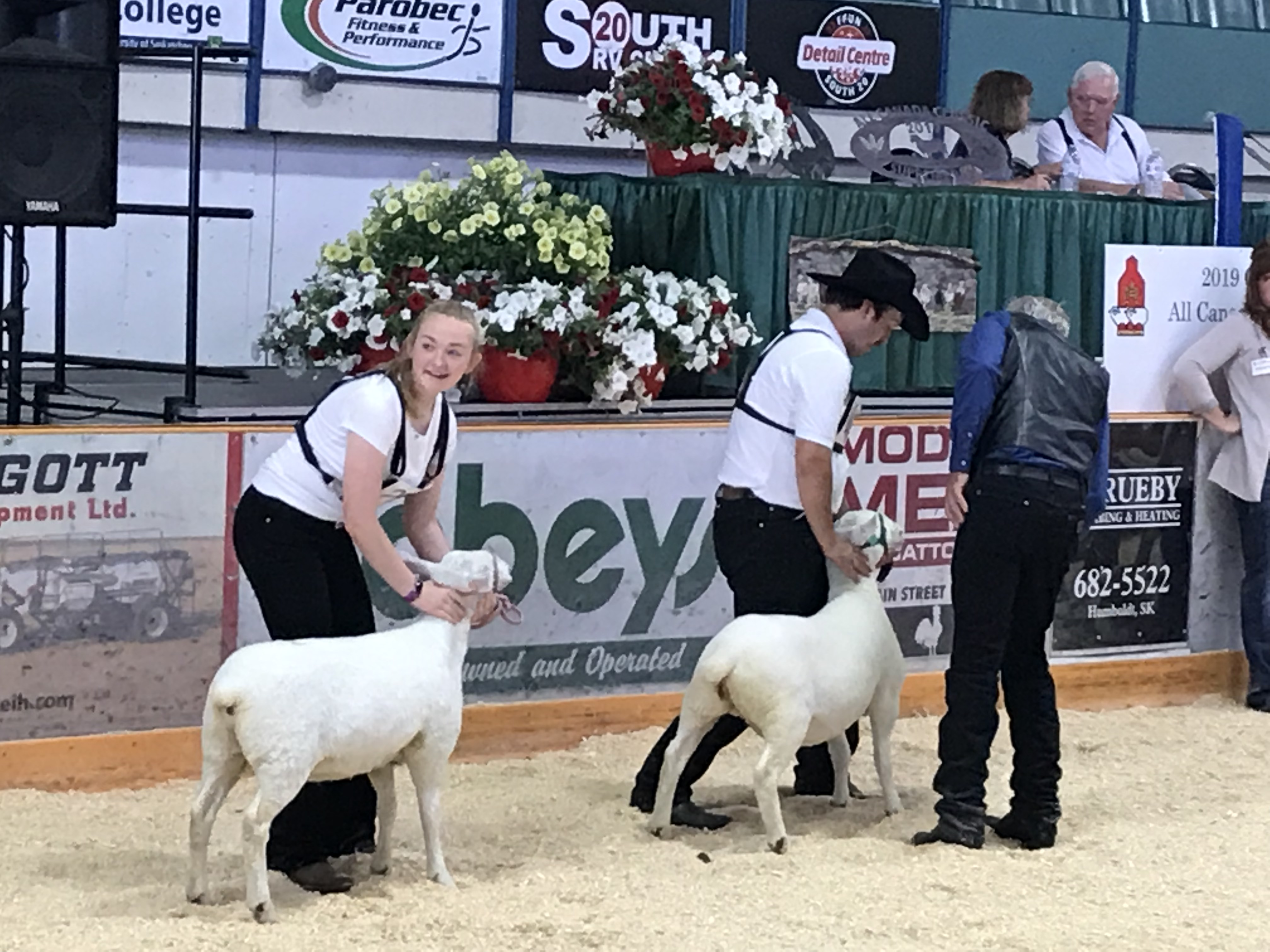 The Canada Sheep Classic Humbolt, Sk 2019