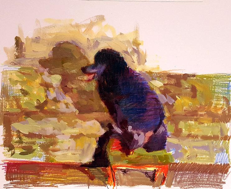 poodle+drawing+2.jpg