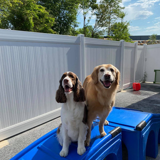 dogs in Coventry day camp