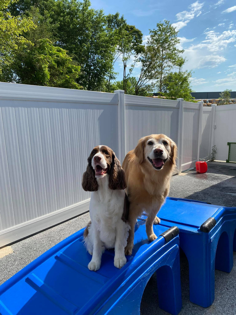 The Coventry School for Dogs - Day Camp in Columbia, MD