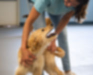 Coventry School for Dogs - Puppy Prep School in Columbia, Maryland