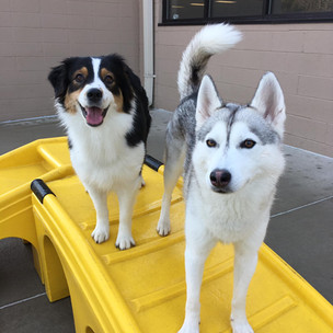 dogs at Coventry day camp