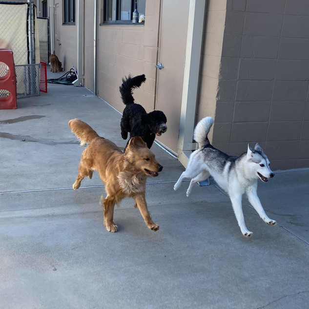 dogs playing at Coventry day camp