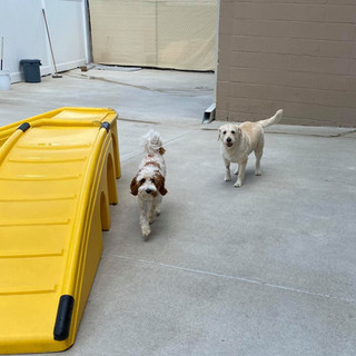 dogs playing at day camp in Howard County