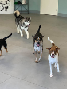 The Coventry School for Dogs - Dog Day Camp in Columbia, MD