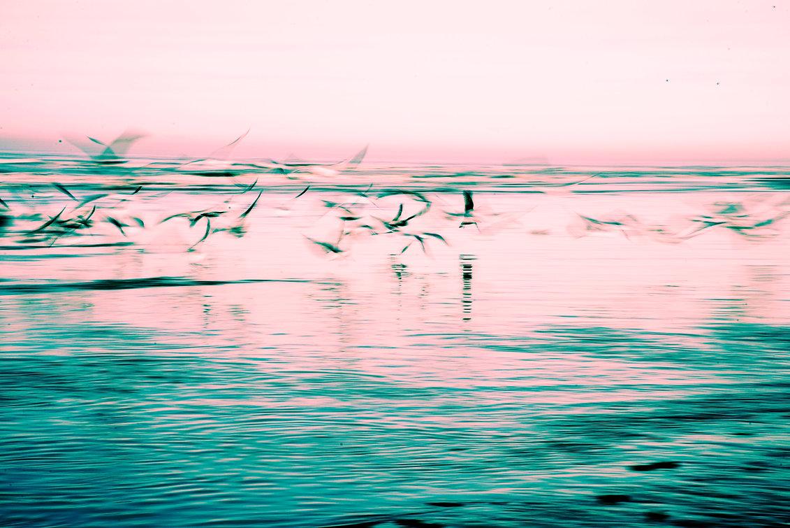 gabbiani_sunset_bassa.jpg