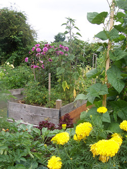 Pea Patch 2