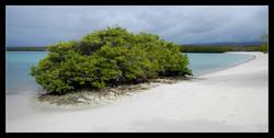 en Terre des Galapagos