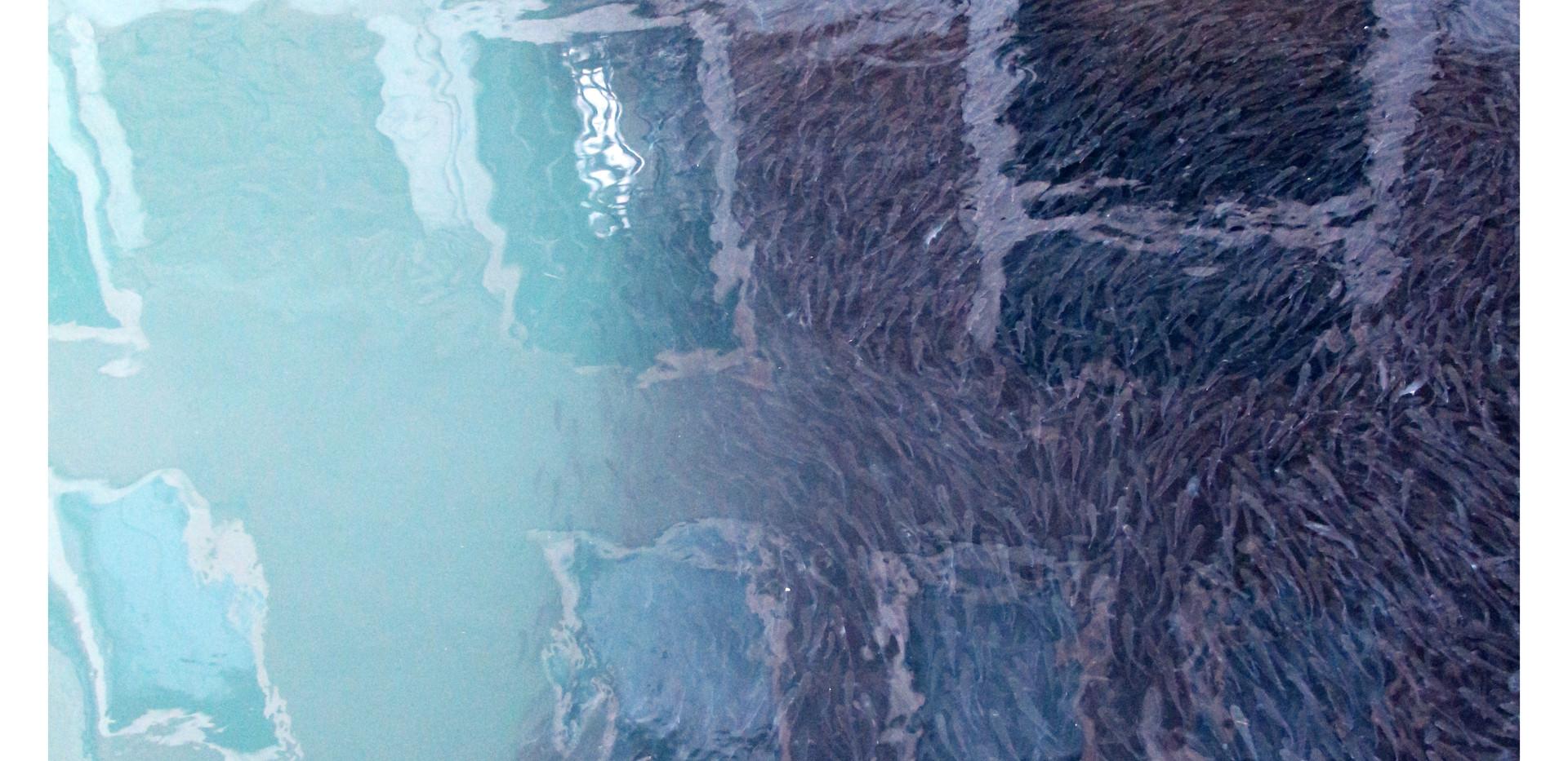 Cormorant's Paradise, New Venezia by Alexandre Cosentino Dec 2020