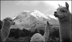 en Terre Quechua