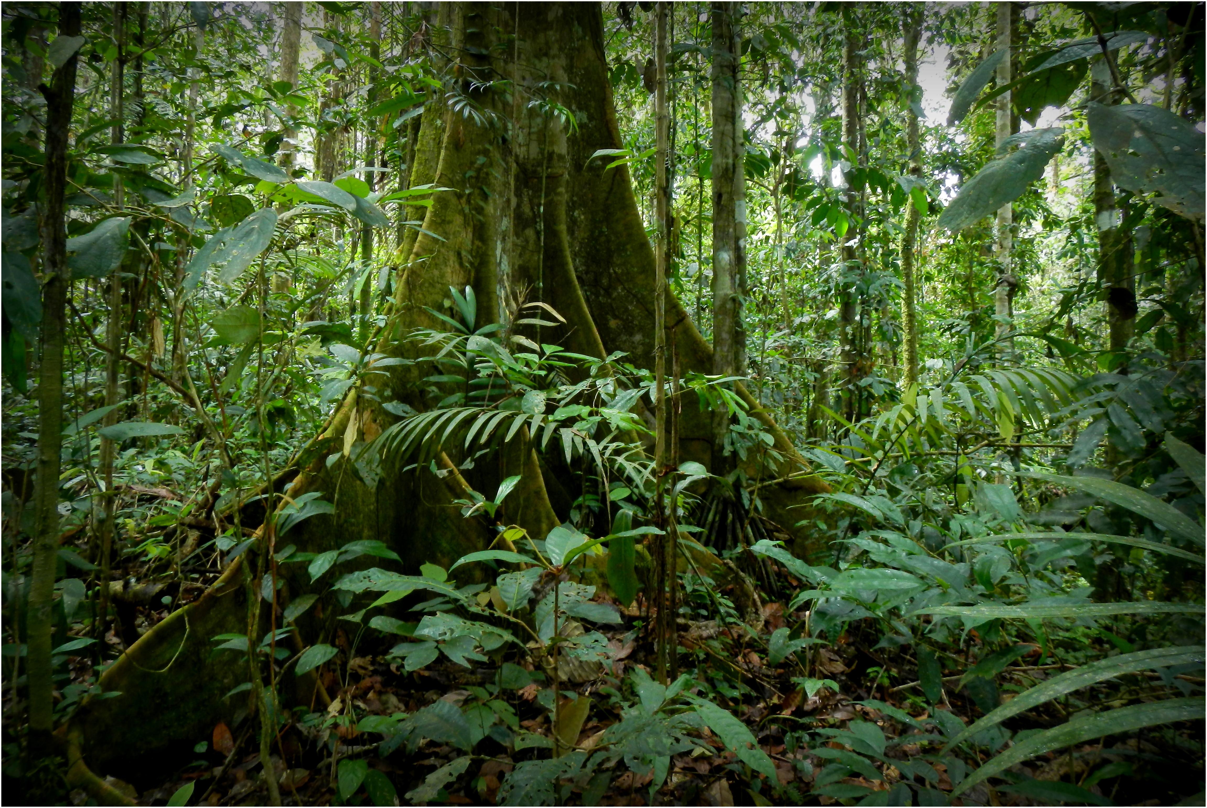 en Terre Huaorani