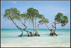 en Terre des Andamans