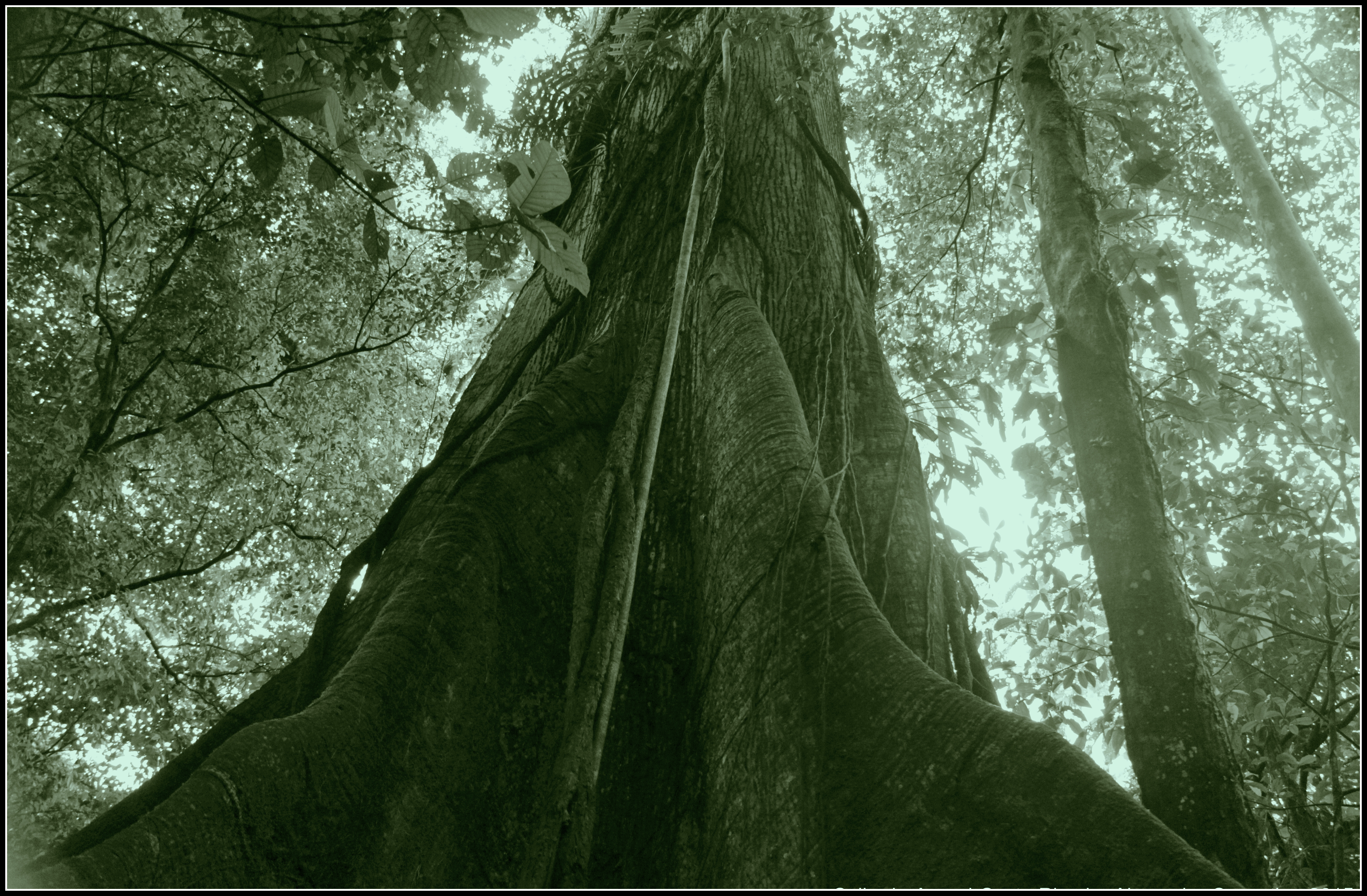 en Terres amazoniennes