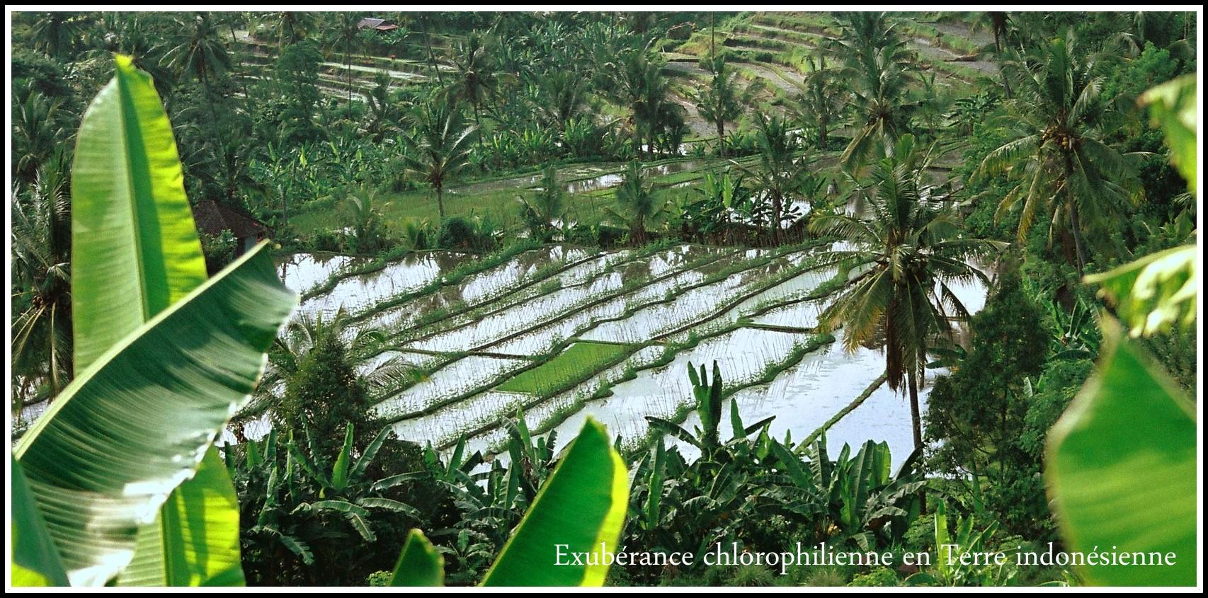 en Terre Balinaise