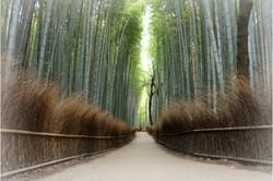Ogive de bambou à Kyoto