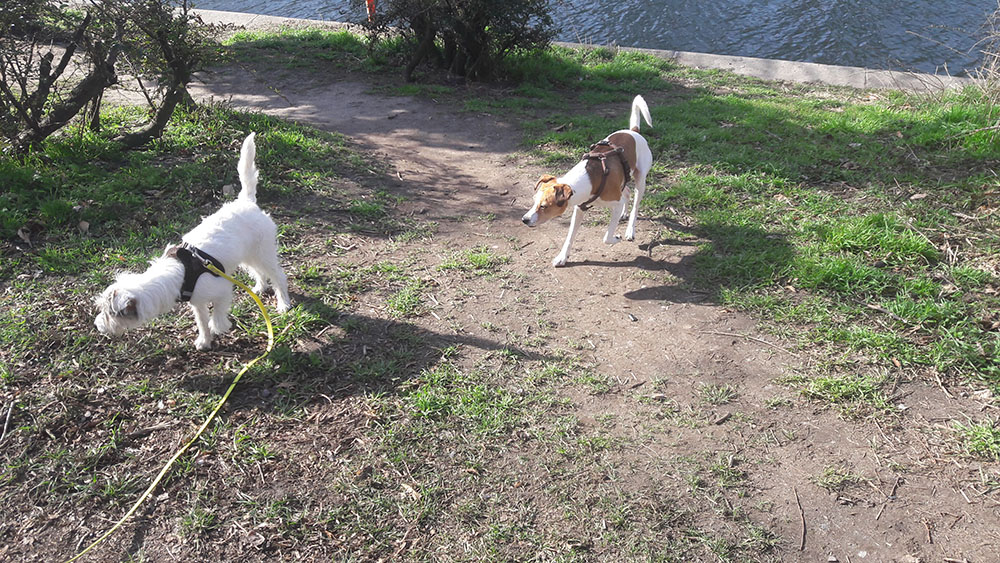 Zwei Hunde am Ufer