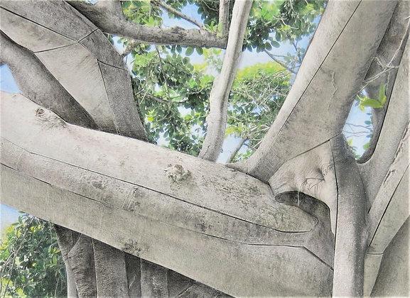 Banyan Study 200