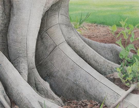 Banyan Study 400
