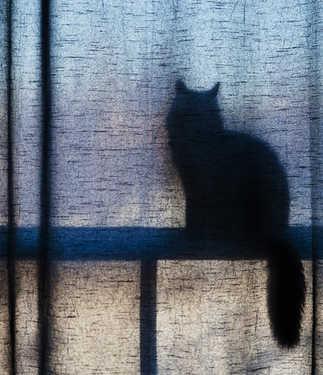 Chat en ombre chinoise derrière le rideau